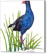 Nz Native Pukeko Bird Canvas Print