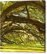 Oak Alley Tunnel Of Oaks Canvas Print