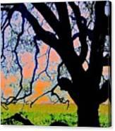 Oak At Elkhorn Canvas Print