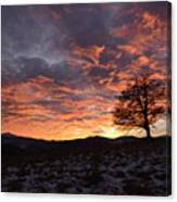 Oak At Sunset In Winter Canvas Print