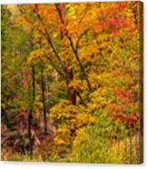 Oak Creek 1 Canvas Print