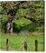 Oak Creek Guards Canvas Print