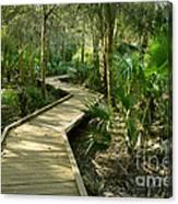 Oak Hammock Trail, Florida Canvas Print