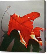 Oak Leaf 1 Canvas Print