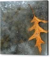 Oak Leaf In Ice  Canvas Print