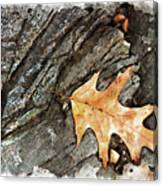 Oak Leaf On The Rocks Canvas Print