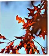 Oak Leaves 2 Canvas Print