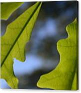 Oak Leaves Abstract Designed By Nature Canvas Print