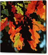 Oak Leaves In Autumn Canvas Print
