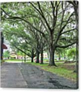 Oak Lined Drive Canvas Print