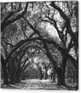 Oak Lined Drive Way, Coastal, South Carolina  Canvas Print