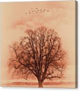 Oak Tree Alone  Canvas Print