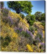 Oak Tree And Wildflowers Canvas Print
