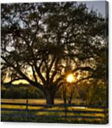 Oak Tree Sunset Canvas Print