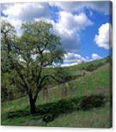 Oak Tree With Clouds Canvas Print