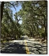 Oak Trees Along Live Oak Canyon Road Canvas Print