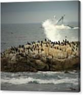 Ocean Angel II Splashed And Birds Canvas Print