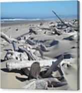 Ocean Coastal Art Prints Driftwood Beach Canvas Print