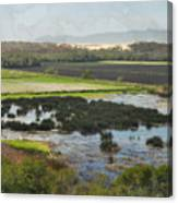 Oceano Dunes Natural Preserve Canvas Print