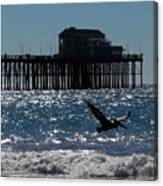 Oceanside Resident Photograph Canvas Print