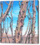 Ocotilla Canvas Print