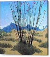 Ocotillo Canvas Print