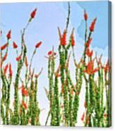 Ocotillo Shower Canvas Print