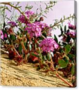Ocotillo Wilds Canvas Print