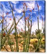 Ocotillos In Bloom Canvas Print