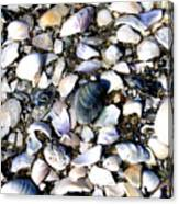 Ocracoke Shells Canvas Print