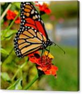 October Butterfly Canvas Print