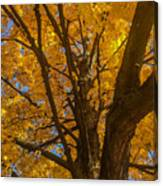 October Day Canvas Print