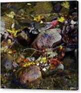 October Puddles Canvas Print