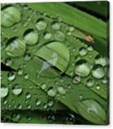 Drops Of Rain Canvas Print