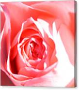 October Rose Close Up Canvas Print