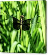 Odanate With Wings Spread Canvas Print