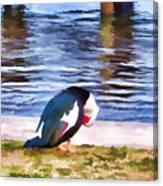 Odd Looking Duck In Swansboro Nc Canvas Print