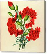 Oeillet Rouge Canvas Print