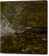 Of Fishes And Rainbows - Wild Salmon Run In The Creek Canvas Print