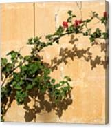 Of Light And Shadow - Bougainvillea On A Timeworn Plaster Wall Canvas Print