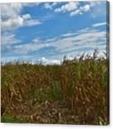 Of The Corn  Canvas Print
