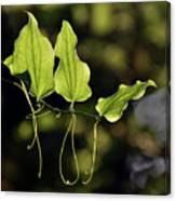 Of Veins And Tendrils Canvas Print