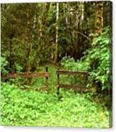 Off The Beaten Path Haida Gwaii Bc Canvas Print