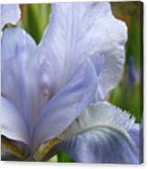 Office Art Blue Iris Flower Floral Giclee Baslee Troutman Canvas Print