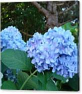 Office Art Hydrangea Flowers Blue Giclee Prints Floral Baslee Troutman Canvas Print