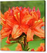 Office Art Prints Azaleas Botanical Landscape 11 Giclee Prints Baslee Troutman Canvas Print