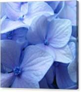 Office Art Prints Blue Hydrangea Flowers Giclee Baslee Troutman Canvas Print