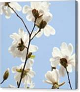 Office Art Prints Blue Sky White Magnolia Flowers 38 Giclee Prints Baslee Troutman Canvas Print