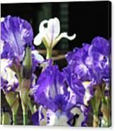 Office Art Prints Iris Flower Botanical Landscape 30 Giclee Prints Baslee Troutman Canvas Print