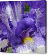 Office Art Prints Iris Flowers Purple White Irises 40 Giclee Prints Baslee Troutman Canvas Print